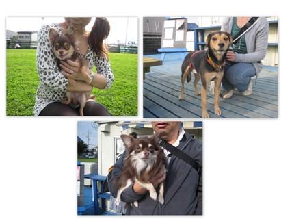 2011-11-20 チワワ・ビーグル集まれ 2