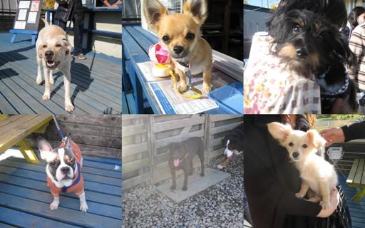 2011-11-26 パピー犬集まれ1