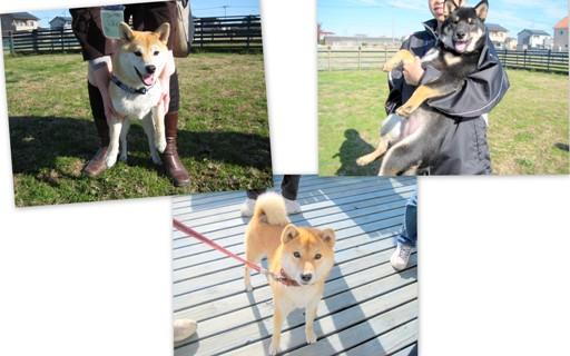 2011-12-10 和犬集まれ