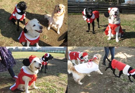 2011-12-15クリスマス衣装のわんちゃん達1