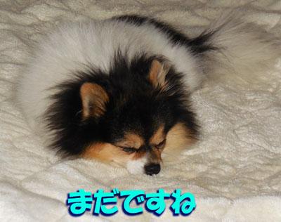 DSCN7276_20140117190329731.jpg