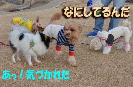 DSC_7654.jpg