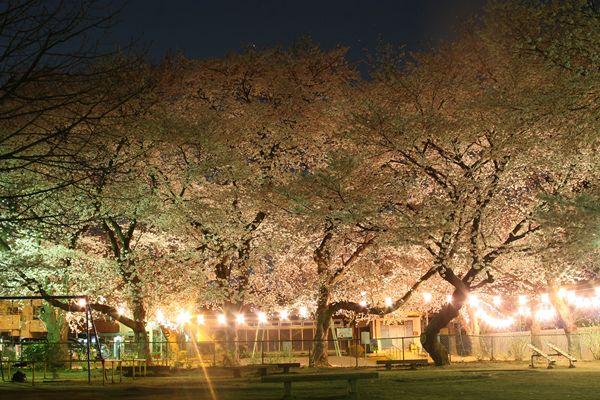 久伊豆神社の公園の夜桜☆