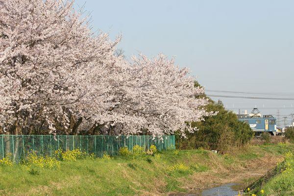 桜とEF641000番台