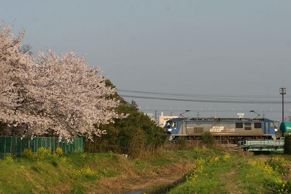 桜とEF210『桃太郎』