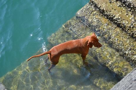 船を待つ犬