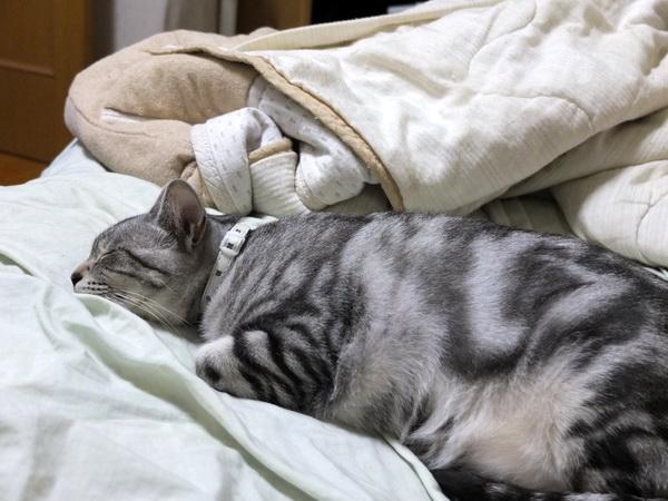 寝る以上の幸せってあるの?