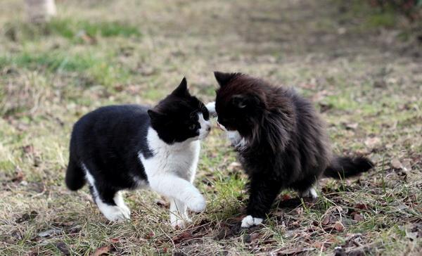 子猫超ウマイ!