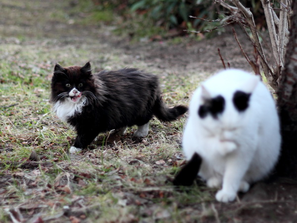 美味しそうな白猫です・・・。