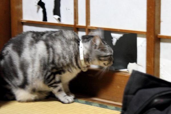 あらこんなところに美猫!