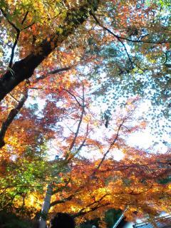 鈴虫寺への道