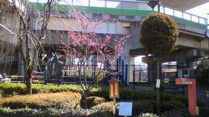 杉と梅の木