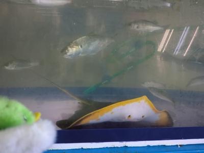 中海の魚の水槽展示