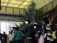 玄関広場のツリー^^