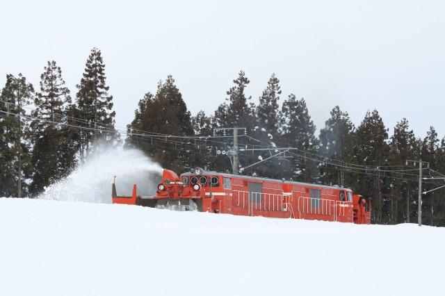 関山防雪林バック