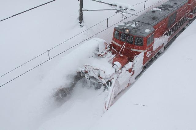 29日の特雪
