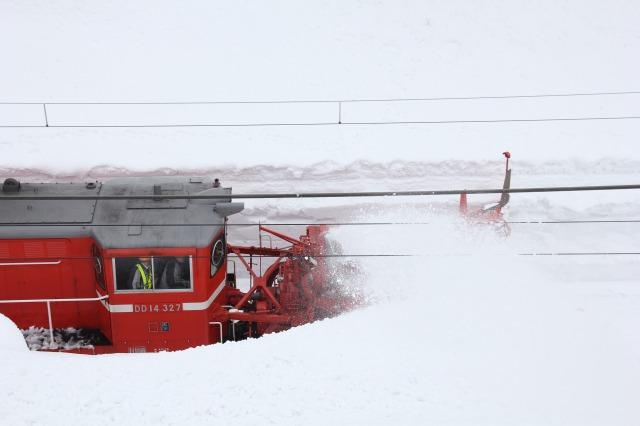 14日 特雪