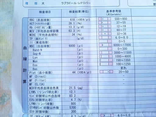 20110922健康診断 2コピー