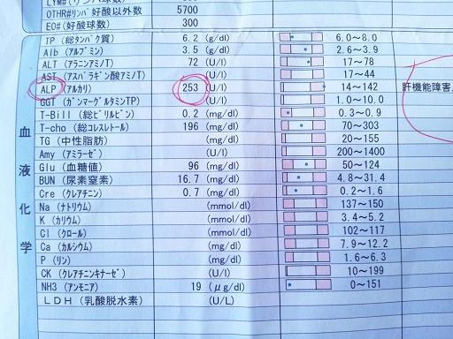 20110922健康診断 1コピー