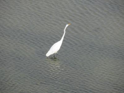 淀川の鳥2