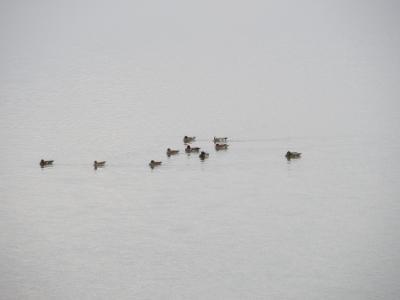 淀川の鳥4