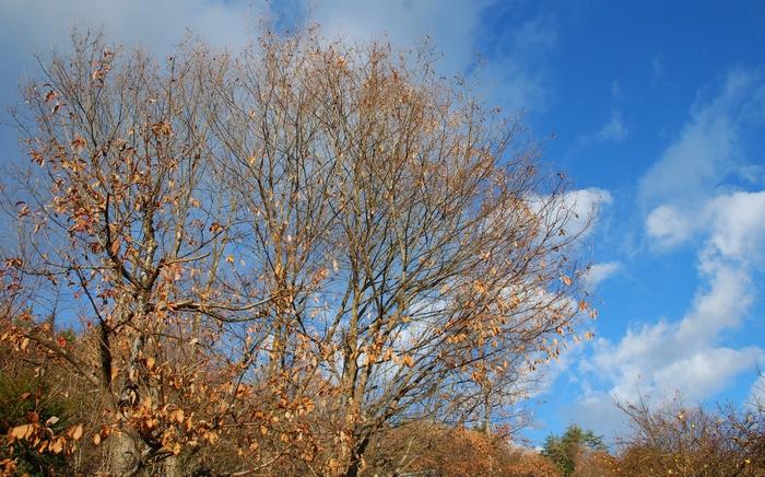 小楢の葉も落ちて7