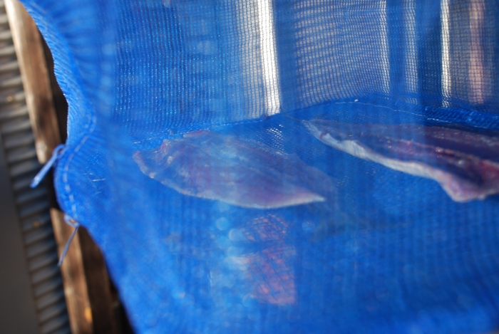 秋刀魚開き3