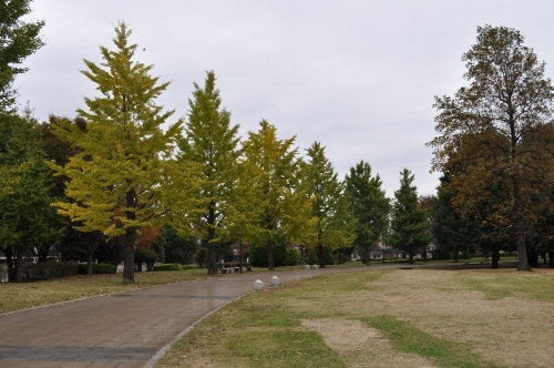 DSC_1474 (500x332)