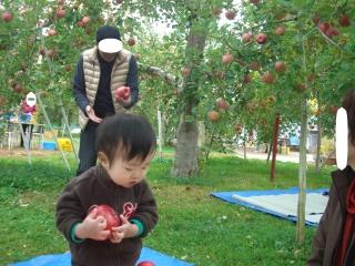 りんご狩り⑦