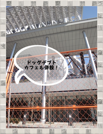 DSC02340.jpg