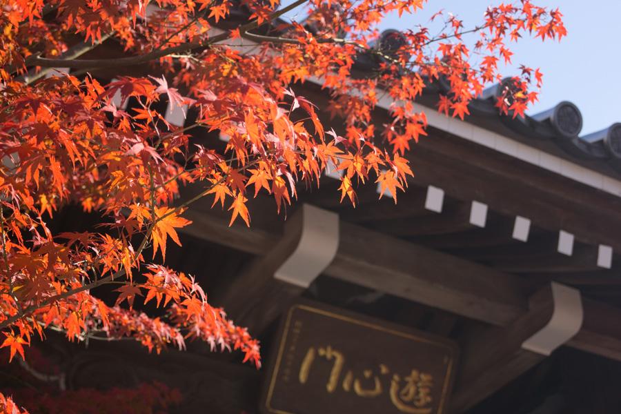 20131210_永観堂_2