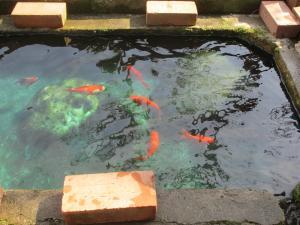 金魚b (4)