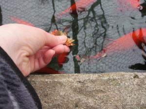 金魚 e(22)