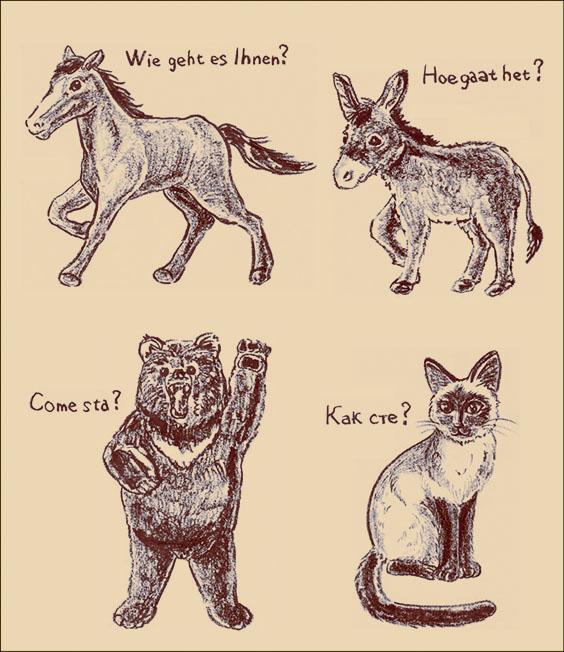 馬、ロバ、熊、猫2web