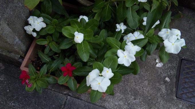 Flowers_20110823