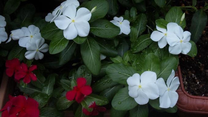 Flowers_20110831