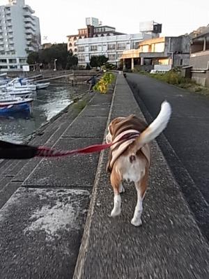 s-朝散歩2