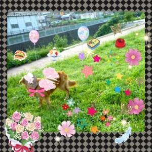 犬&お花畑