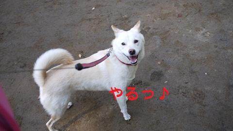 P1070355.jpg