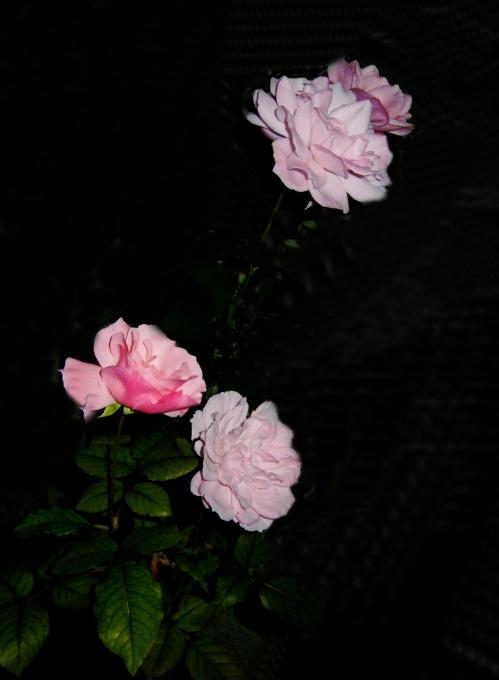 DSCN4934.jpg