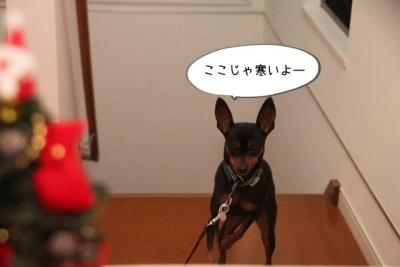 2013_12_23_9999_70.jpg
