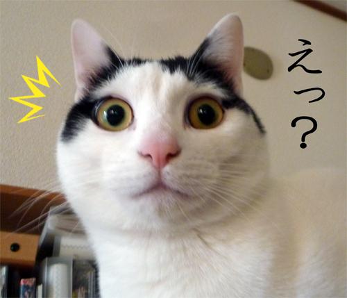 えっ!って顔の猫