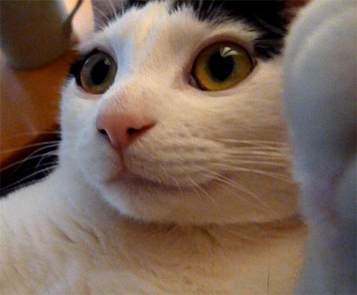 猫(ちっぷ)アップ