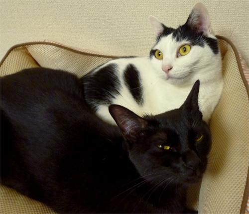 二匹の猫が添い寝
