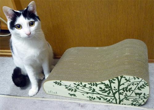 猫と爪とぎ山