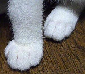 $FF14ってなんなんだろう-猫の足