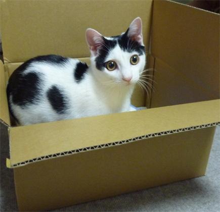 FF14ってなんなんだろう-箱猫