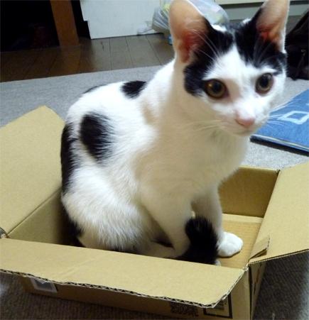 FF14ってなんなんだろう-小さい箱猫