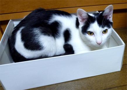 FF14ってなんなんだろう-箱の猫