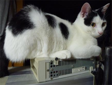 $FF14ってなんなんだろう-狭い所に座る猫